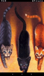 Warrior Cats - Richtig oder Falsch?