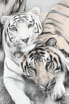 The World of the Tigers
