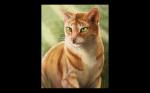 Wahr oder Falsch - das Warrior Cats Quiz
