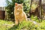 Warrior Cats-Welchen Rang hast du in deinem Clan?